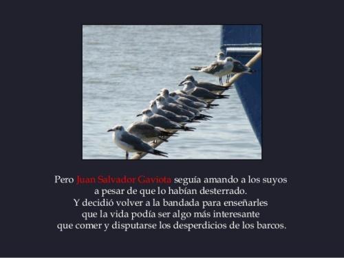 Juan Salvador Gaviota - los suyos