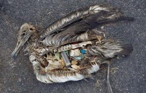 ave muerta por plastico
