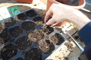 poniendo semillas huerto urbano