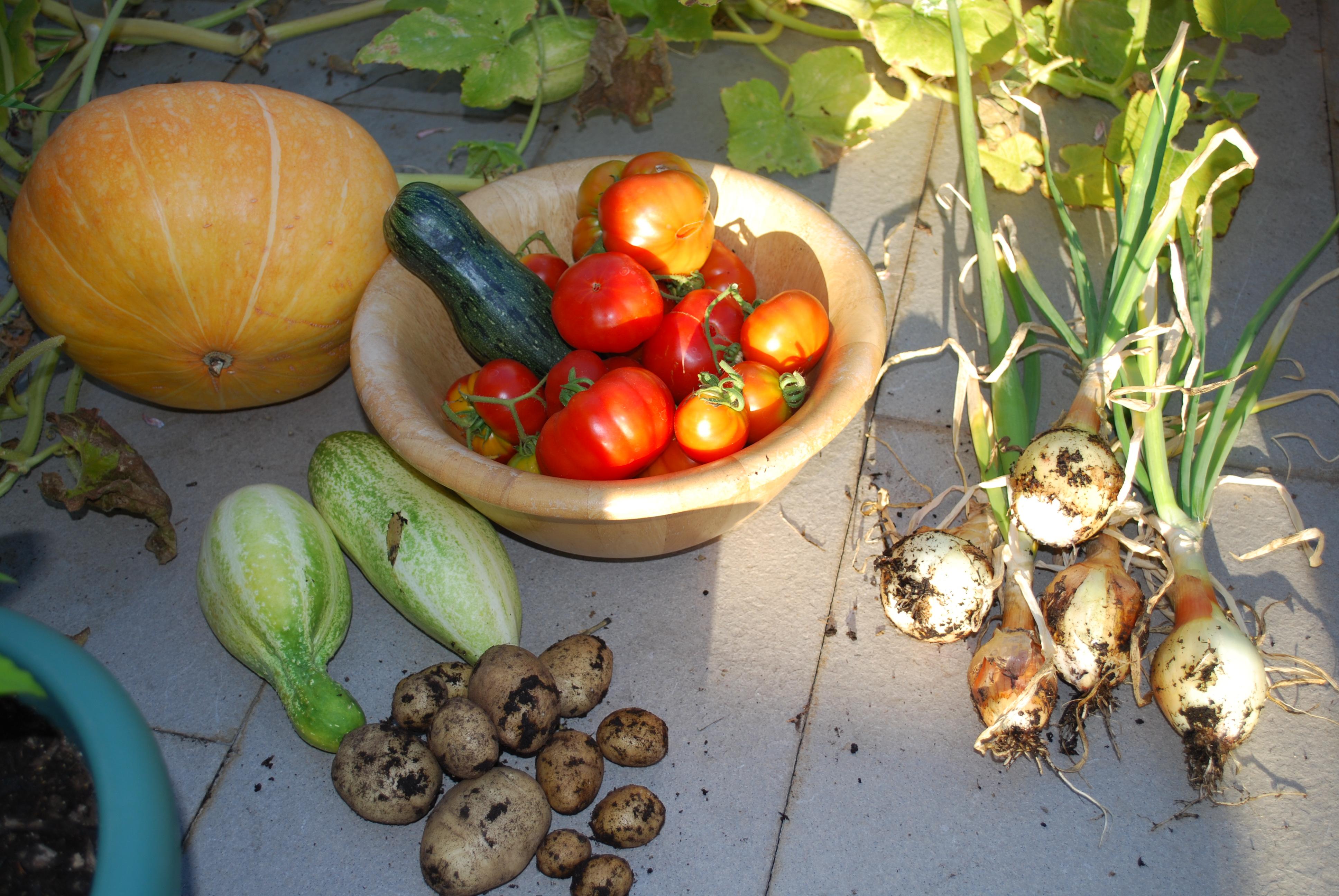 Los frutos de mi huerto lo que podemos hacer - Mi huerto urbano ...