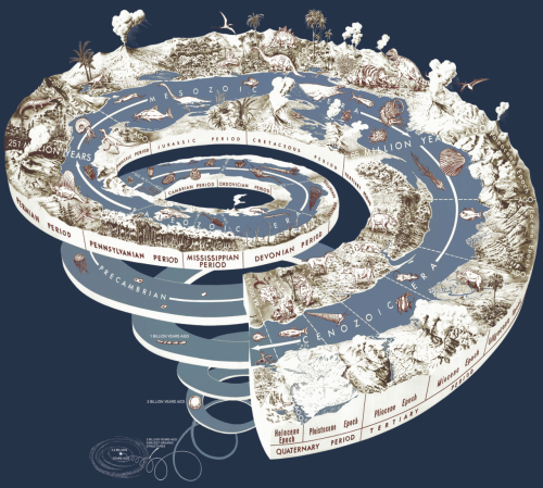 Evolucionarios espiral vida