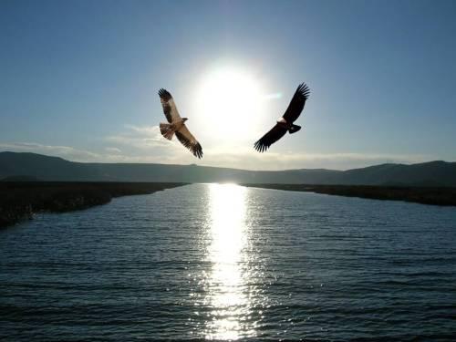 Condor y aguila