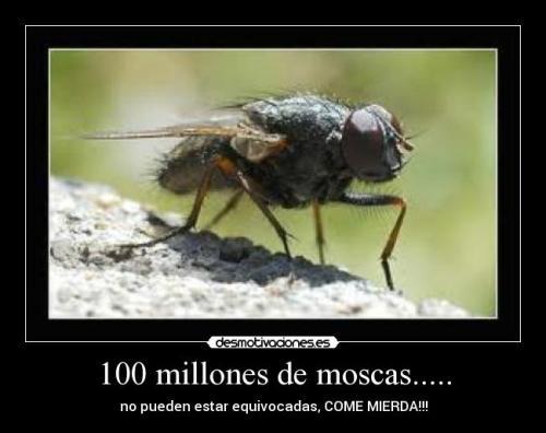 Millones de moscas