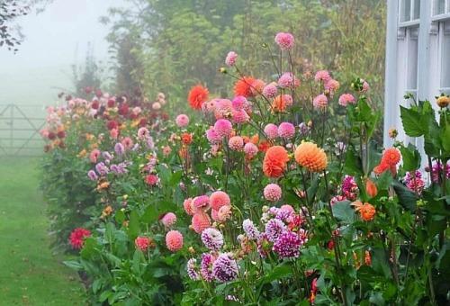 Resultado de imagen de jardín lleno de flores